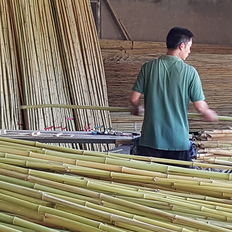 UK Bamboo supplies - Gallery