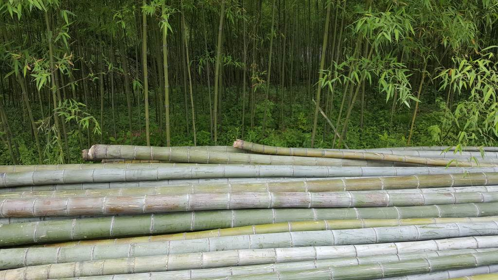 UK Bamboo supplies - China Visit 2016