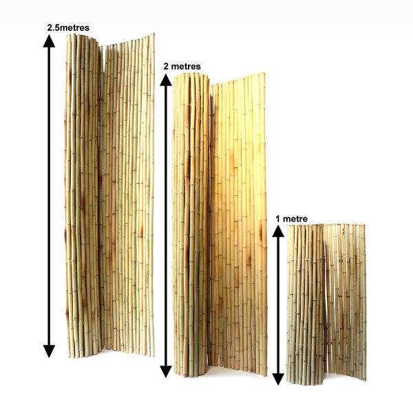 moso bamboo fencing