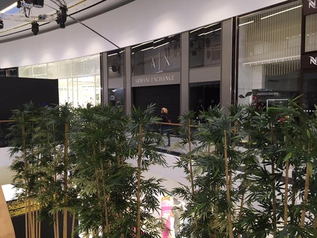 UK Bamboo supplies - Plant Art
