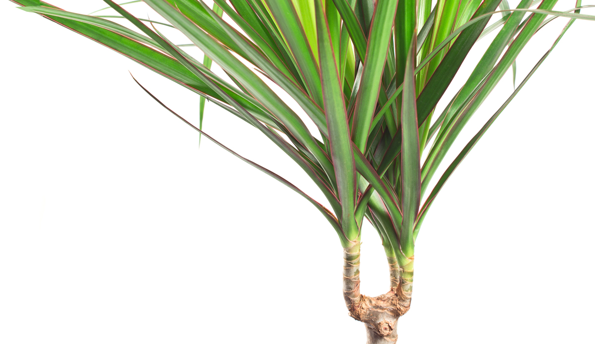 UK Bamboo supplies - 7 of the Best Houseplants that Love Bamboo