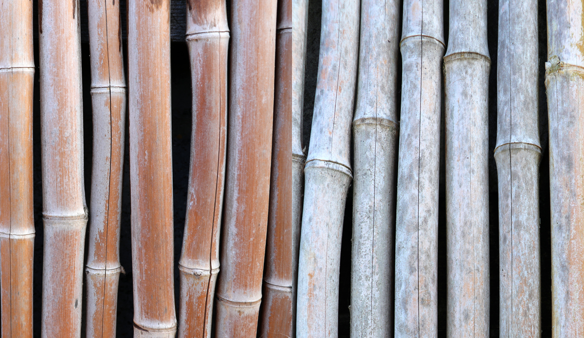 UK Bamboo supplies - 7 Amazing Facts About Bamboo