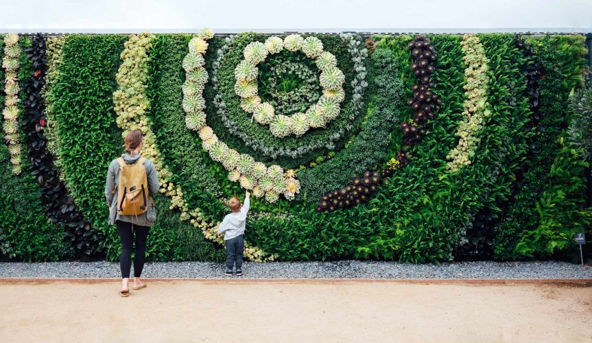 wall covered in vertical planting living wall