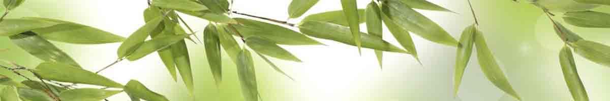 UK Bamboo supplies - Newsletter Sign-Up