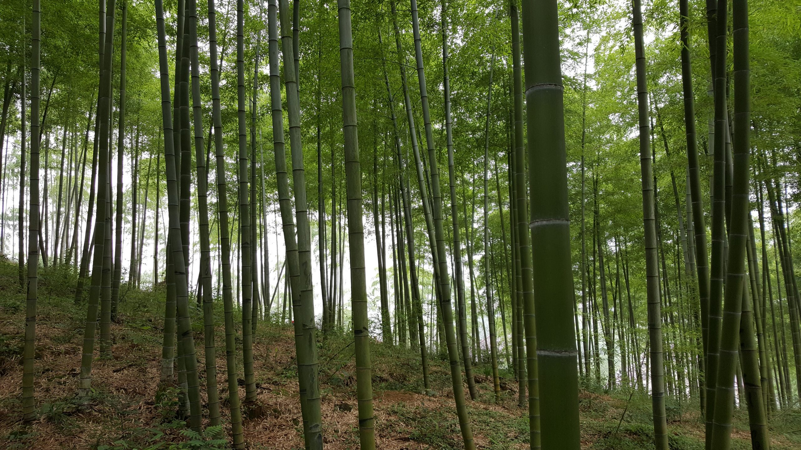 UK Bamboo supplies - Bamboo News & Inspiration