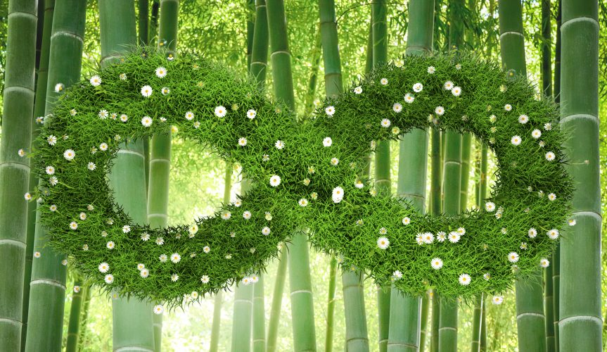 green grass infinity symbol with bamboo forest background
