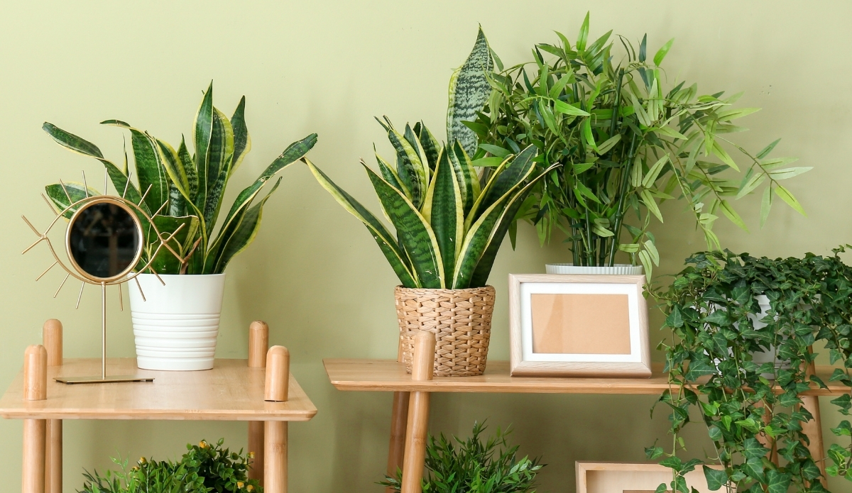 UK Bamboo supplies - We have found your ideal green material for your interior this year!